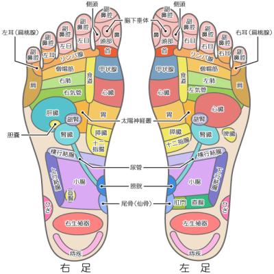 足裏の反射区(はんしゃく)